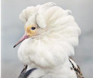 Palsasuot ovat Suomen linturikkain suotyyppi. Sellaisilta tapaa vielä suokukkoja.